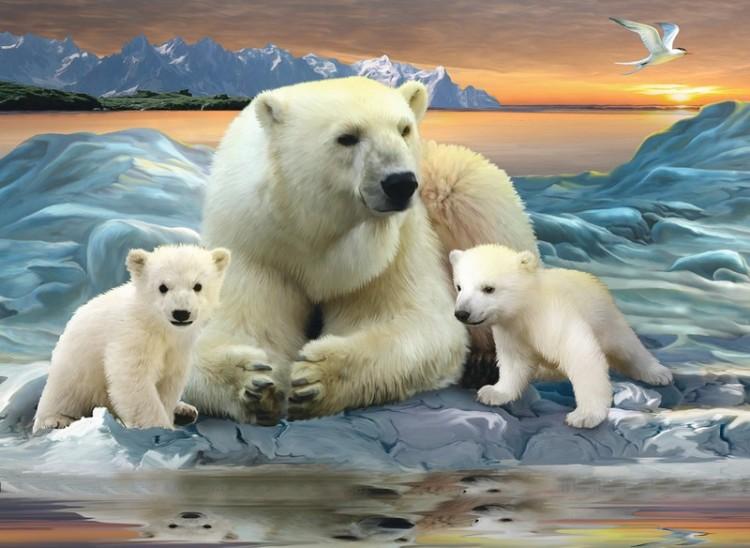 фото с белым медведем 94